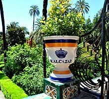 SEVILLA - The REAL ALCAZAR - A detail of the main garden by Daniela Cifarelli