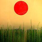 sun by KPElias