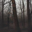 woods by womoomow