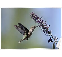 Hungry Hummer... Poster