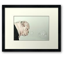 Dollar Framed Print