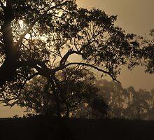 Early Morning Fog by warriorprincess