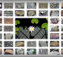 Lily on Stones by Michael Rubin