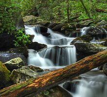 Smoky Mountain Stream by Jason Vickers
