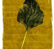 Sunflower Leaf by Rene Hales