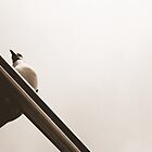 Seagull by Maddy Weber