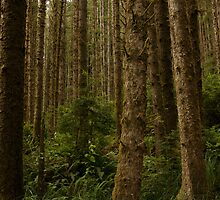 Redwood National Forest by Rick Champlin