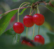 Cherries by Paola Svensson
