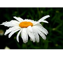 Rainy Day Daisy Photographic Print
