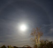 moon halo by Rosie Appleton