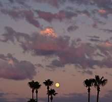 sunset, moon and palm trees by Jorge Vismara