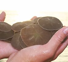 Sand Dollars by Terra Berlinski