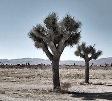 GRAY DESERT LAND by Paul Quixote Alleyne