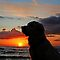 My Golden Retriever Ditte and the sunset by Trine