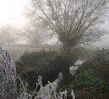 Frosty Morning by John Bromley