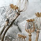 Poppy Seed Pods in Ice by John Bromley