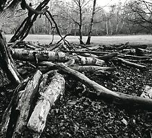 Broken Birches B&W by Gary Rayner