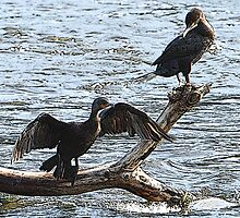 A Pair Of Double-crested Cormorants (Special Effects) by DigitallyStill
