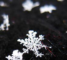 Winter Shape by EstherJoy