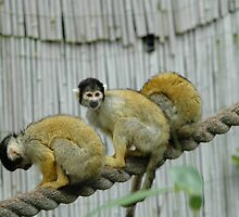 monkey triplets by jake bartholomew