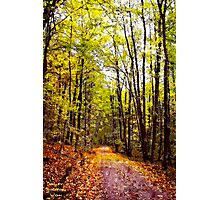 Autumn Country Lane I / Photographic Print