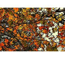 Autumn Gold  / Photographic Print