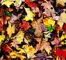 Autumn Pattern  /   by Shelley  Stockton Wynn
