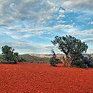 Red Rock/ Red Soil by Barbara Manis