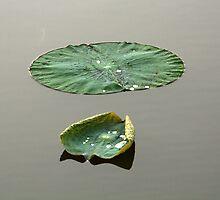 Lilypad by kaung