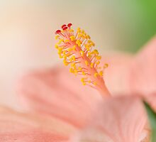 Heavenly Hibiscus by Jacky Parker