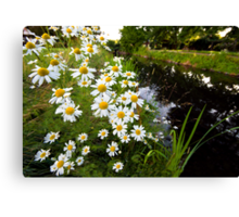 Camomiles in the park. Canvas Print