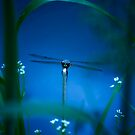 Nightshift by Demoshane