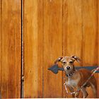 Guard Dog by James  Birkbeck Animals