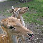 Rude Deer by Ladymoose