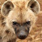 Hyena subby  by Leon Rossouw
