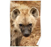 Hyena subby  Poster