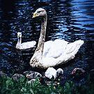 Swan Mother by Demoshane