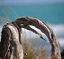 ocean beyond by Lisa Will