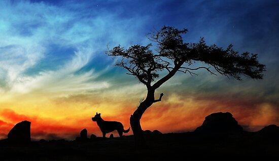 Dog Rocks by Margaret Metcalfe