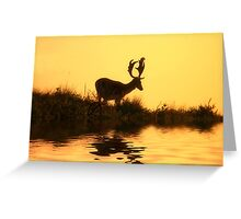 Fallow Deer (Dama dama) (1) Greeting Card