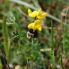 Little Pollinator  by Nick McGuire