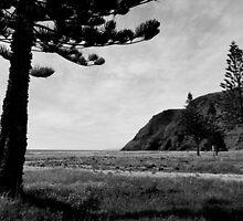 Rapid Bay Pines by ein22