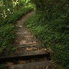 down the mountain by Ryan Bird
