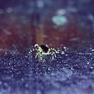Little Spider by ghastly