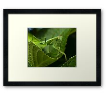 Hello Ms. Praying Mantis! Framed Print