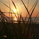 Sunrise on the Dunes by Barbara  Brown