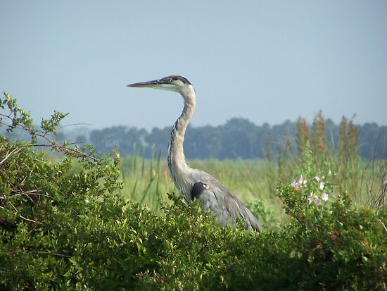 Heron  by Linda Costello Hinchey