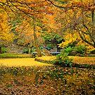 Golden autumn colours at Alfred Nicholas Gardens by Elana Bailey