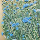 Wild Chickory and weeds by JANET SUMMERS