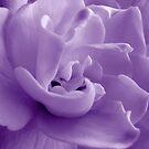 Shades of Gardenia by Kathie Nichols
